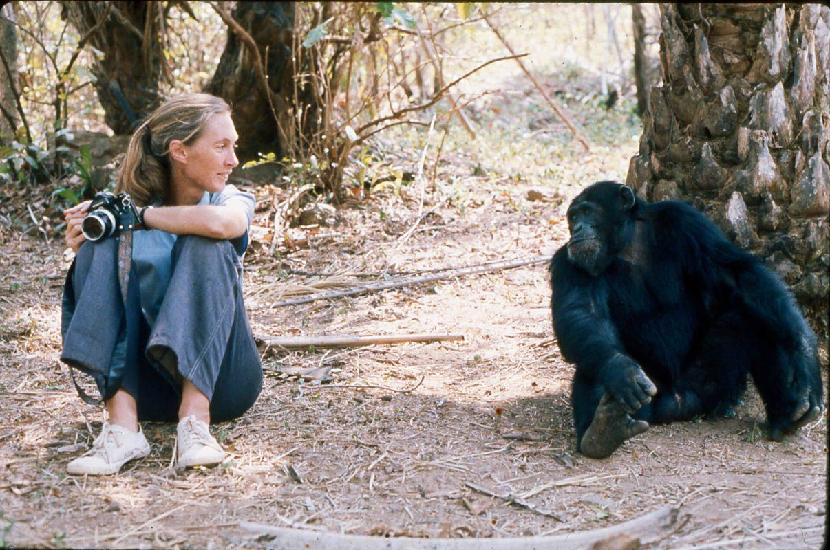 Jane Goodall Unfolding Maps